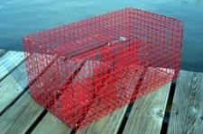 Commercial Pinfish Trap